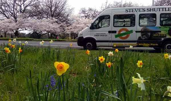 Steve Van daffodils Photo